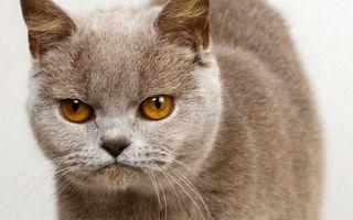 Фото бесплатно кот, глаза, желтые