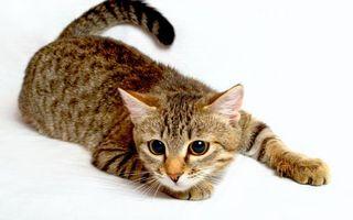 Фото бесплатно котенок, морда, лапы