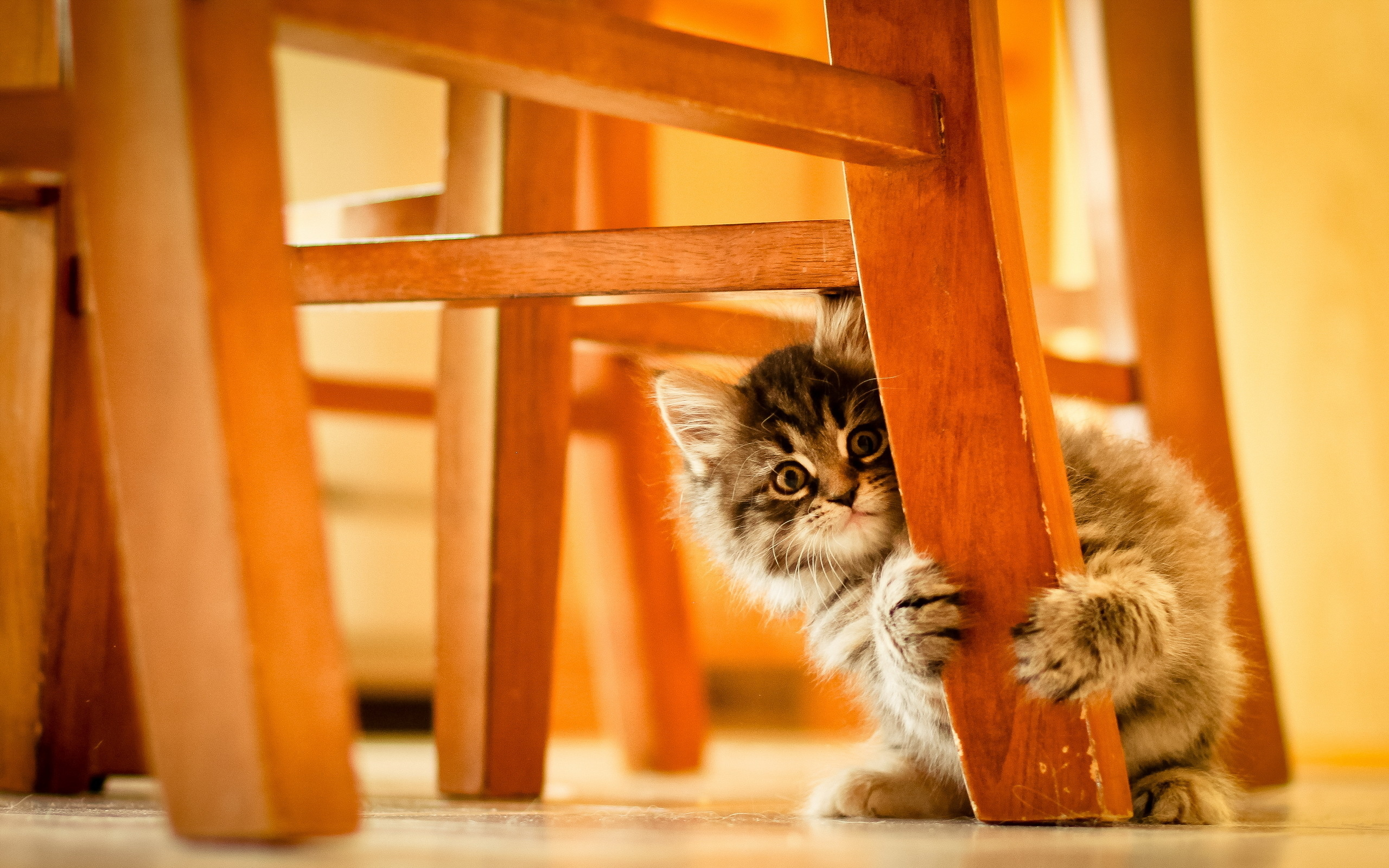 Обои котенок, кот, маленький, пушистый