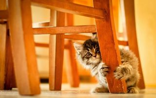 Бесплатные фото котенок,кот,маленький,пушистый,комочек,ребенок,стул