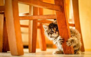 Фото бесплатно котенок, кот, маленький, пушистый, комочек, ребенок, стул, сидит, хвост, шерсть, глаза, усы, уши, кошки