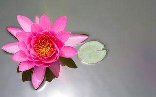 Заставки лепестки, розовый, цвет