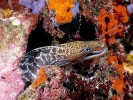 Бесплатные фото море,риф,рыба,угорь,зубы,заставка,подводный мир