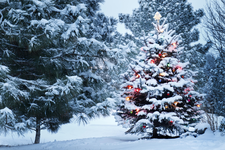новогодняя ёлка, гирлянды, снег