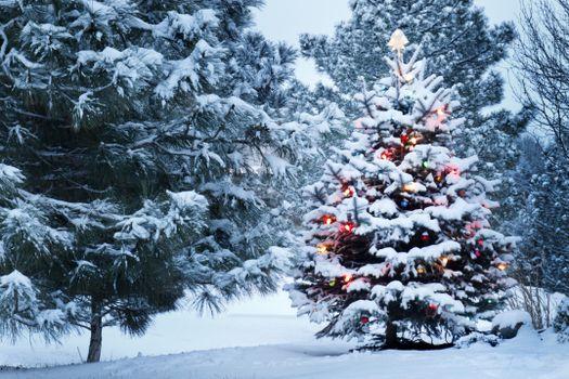 Фото бесплатно новогодняя ёлка, гирлянды, снег