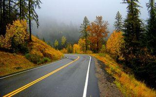 Фото бесплатно осень, маркировка, туман