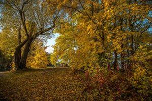 Бесплатные фото осень,парк,лес,деревья,природа