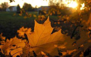 Обои трава, листья, деревья, клен, дома, размыто, природа