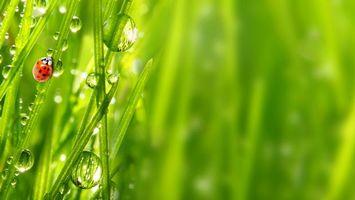 Бесплатные фото трава,зеленая,капли,вода,божья,коровка,природа
