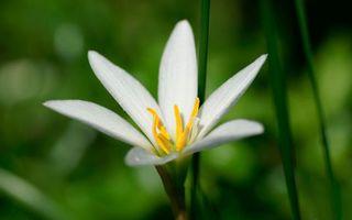 Бесплатные фото цветок,лепестки,листья,стебель,белый,аромат,тычинка