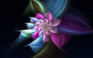 Обои узор, цветок, лепестки, разноцветное, фон, черный