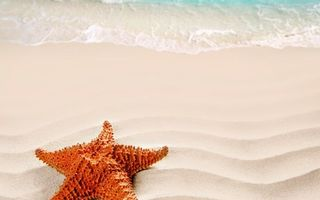 Фото бесплатно звезда, морская, берег