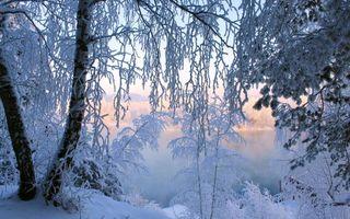 Бесплатные фото снег,деревья,иней,зима