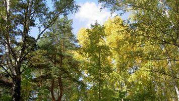 Фото бесплатно деревья, ель, листья, иголки, кора, ствол, зеленый, коричневый, небо, тучи, пейзажи
