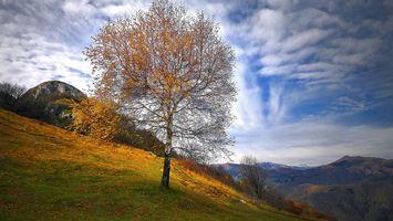 Заставки Альпы,Вальброна,Италия,горы,осень,дерево,пейзаж