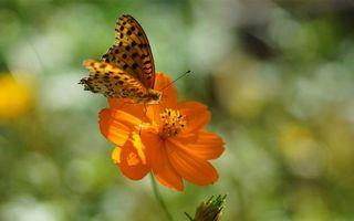 Фото бесплатно бабочка, цветок, сидит