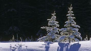 Заставки мороз, снег, ели