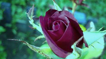 Фото бесплатно макро, цветы, разное