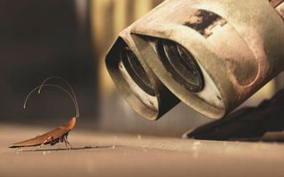 Photo free beetle, mustache, shell