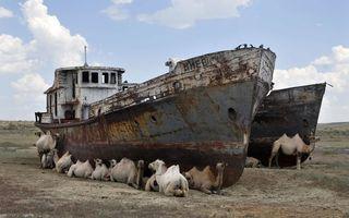 Фото бесплатно корабль, верблюды, стадо