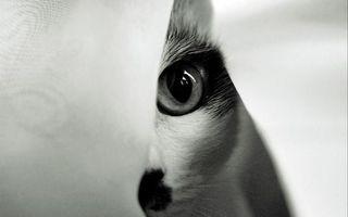Фото бесплатно кот, глаз, котенок
