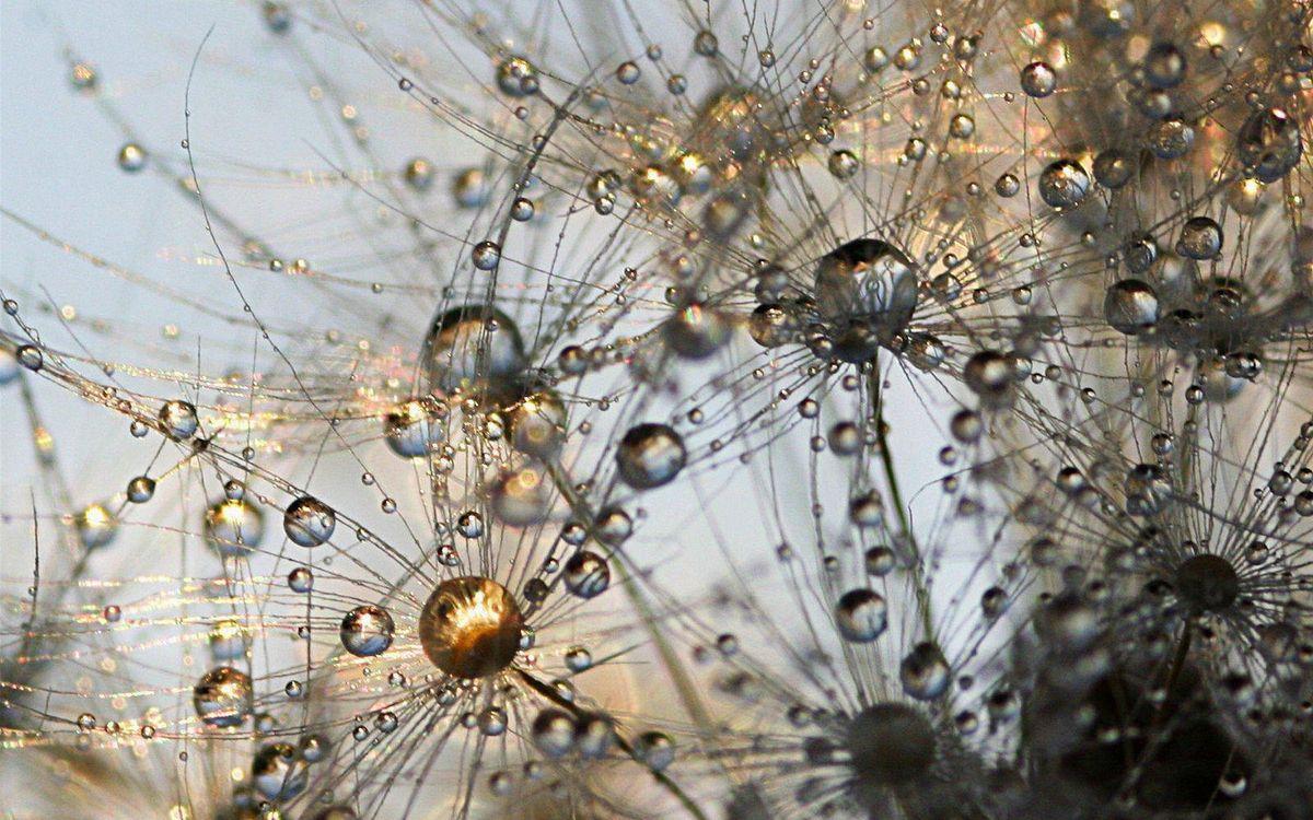 Фото бесплатно кружки, капли, нити, много, необычно, красиво, абстракции, абстракции
