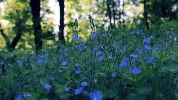 Бесплатные фото лепестки,синие,стебли,зеленые,трава,деревья,цветы