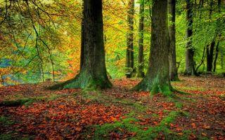 Бесплатные фото лес, деревья, листья, трава, ветки, зелень, природа