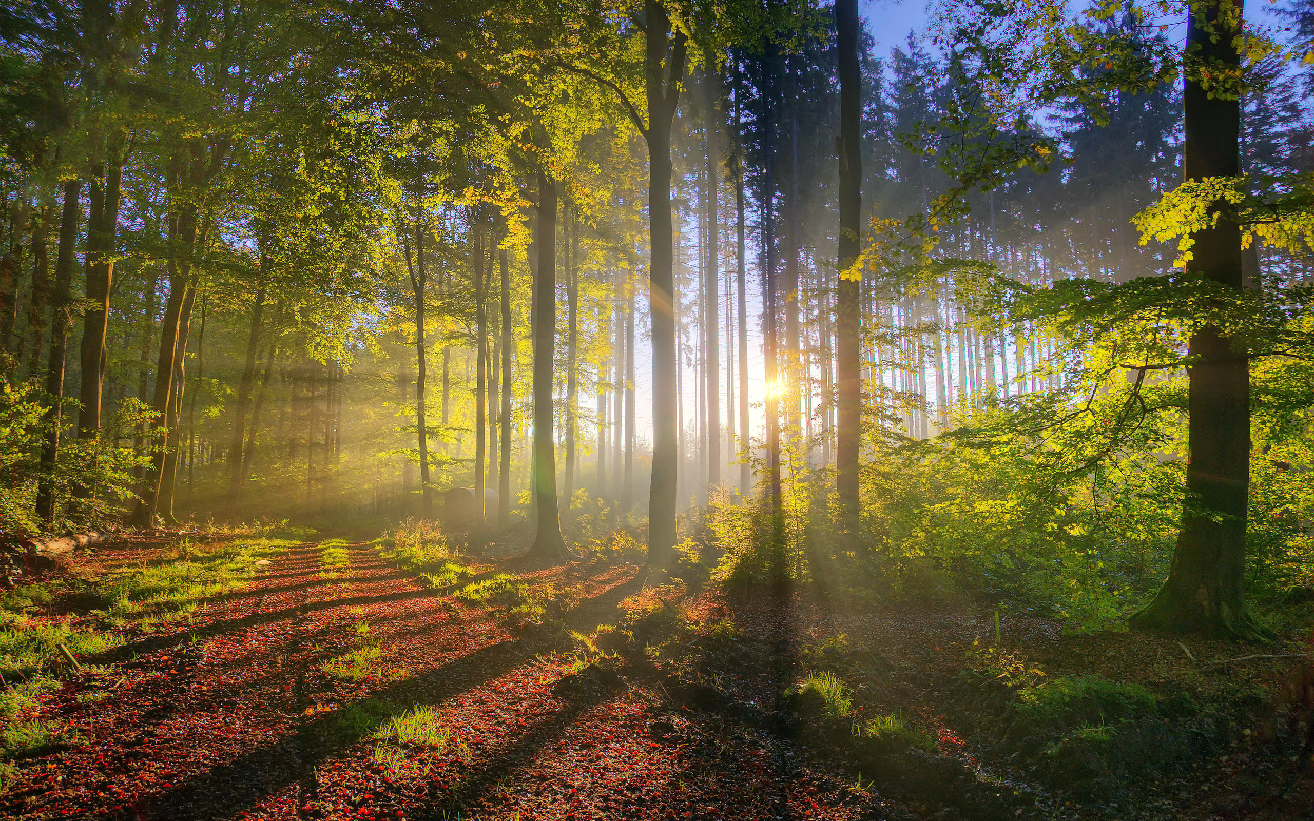 лес, дорога, солнце