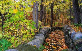 Бесплатные фото лес,деревья,листья,камни,ветки,стволы,кора