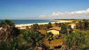 Заставки море, пальмы, песок