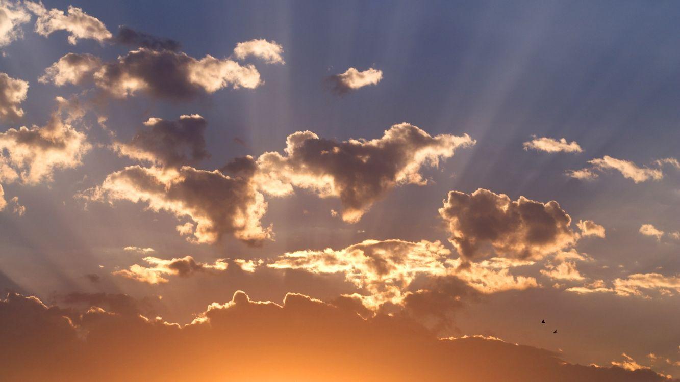 Фото бесплатно небо, облака, птицы, свет, лучи, красиво, природа, природа