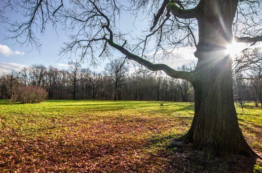Фото бесплатно осень, солнце, дерево