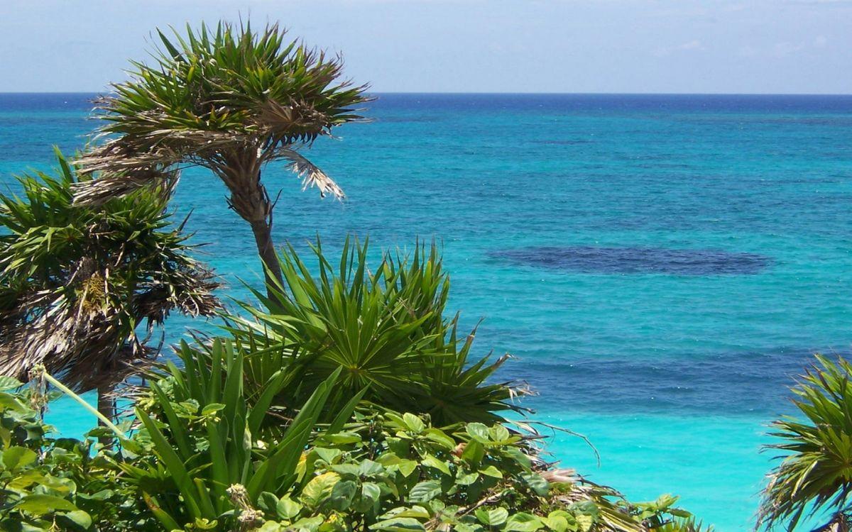 Фото бесплатно остров, пальмы, трава, океан, горизонт, небо, природа, пейзажи, пейзажи