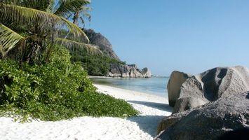 Фото бесплатно пальмы, море, камни