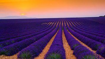 Бесплатные фото поле,лаванда,камни,небо,горизонт,горы,цветы