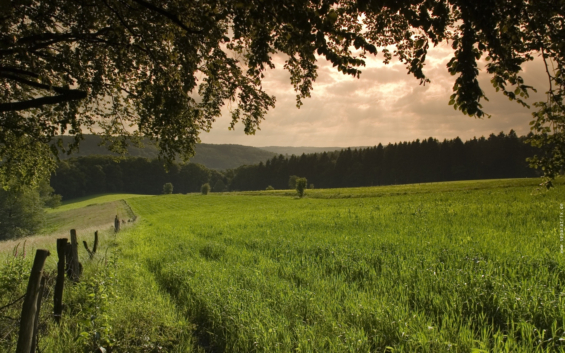 поле, трава, зеленая