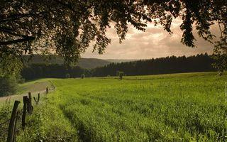 Заставки поле,трава,зеленая,деревья,холмы,небо,природа