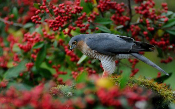 Фото бесплатно птица, клув, ноги
