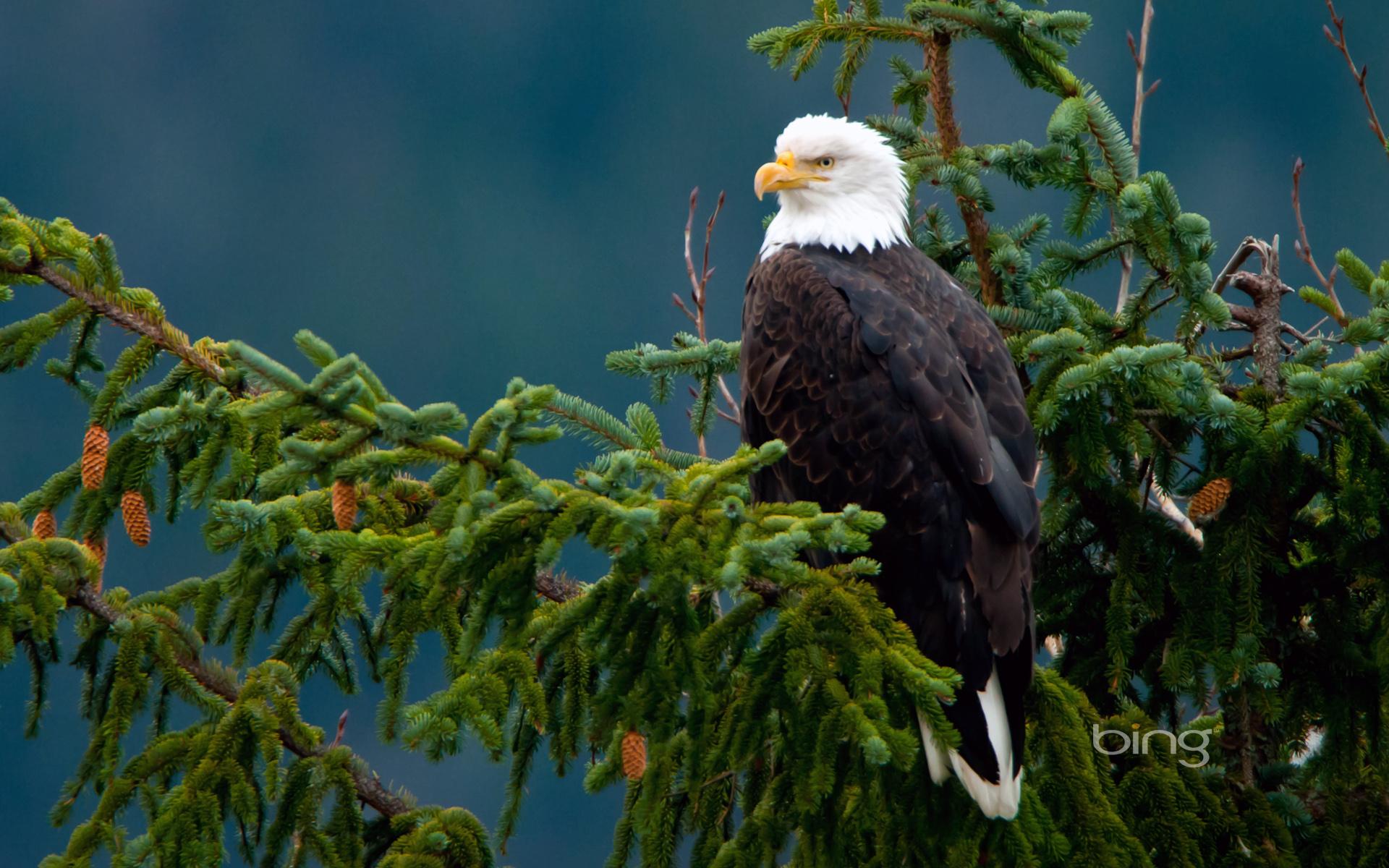 Птица орел сокол перья крылья