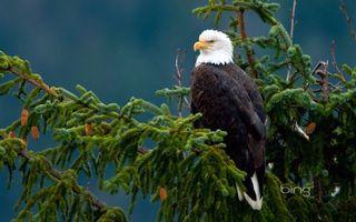 Бесплатные фото птица,орел,сокол,перья,крылья,оперение,голова