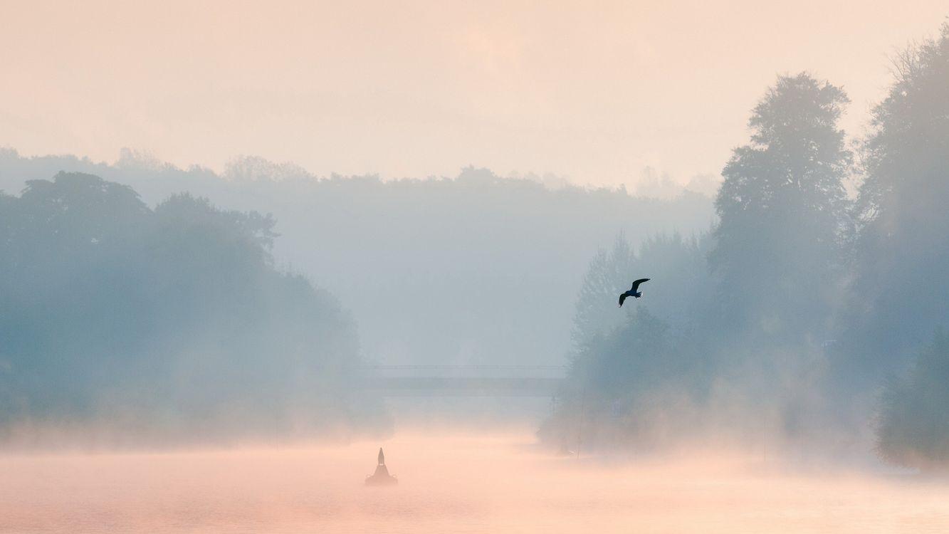Фото бесплатно река, буй, мост, деревья, птица, туман, пейзажи, пейзажи