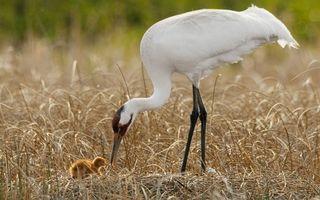 Photo free family, heron, paws
