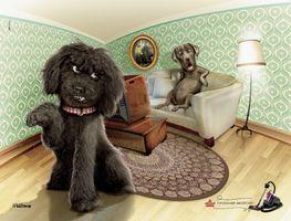 Бесплатные фото собака, собаки, мебель, комната, ковер, телевизор