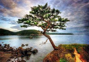 Фото бесплатно сосна, дерево, листья, ветки, крона, колючки, река, озеро, вода, лес, пейзажи