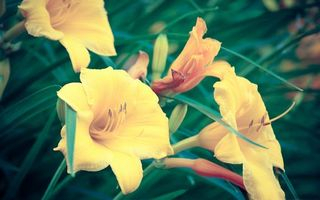 Бесплатные фото цветки,желтые,тычинки,пестик,лепестки,трава,листья