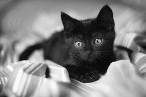 Бесплатные картинки на рабочий стол с кошками 7