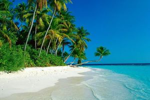 Бесплатные фото остров, берег, океан, пальмы, природа