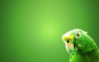 Фото бесплатно попугай, зеленый, фон, птица
