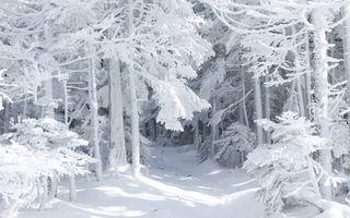 Фото бесплатно зимний лес, деревья, снег